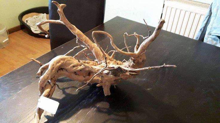 Rote Moorwurzel - Fingerwurzel - Echtholz - Mangrovenwurzel - Aquathier