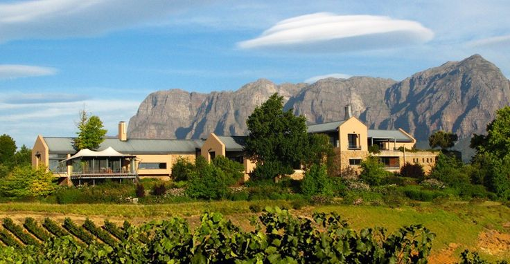 Sleek contemporary lines - spectacular views of olive groves - bought unimaginably good olives- TOKARA   Stellenbosch Wine and Olive Farm, Cape Town