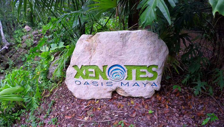 Amazing Xenotes Oasis Maya Tour Xenote Kaak Cenote Agua Ha Kayaking Zipl...   #xenotesoasismaya #xenote #xenotes #oasismaya #cenote #cenoten #cenotes