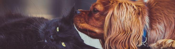 Dogs vs. Cats Redux Playground Competition Winner's Interview: Bojan Tunguz
