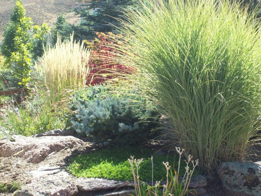 Landscape ideas gardening pinterest shrubs for Landscaping ideas using ornamental grasses