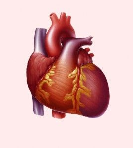 If you are living with enlarged heart, then you should know this information about enlarged heart, which is also known as cardiomegaly. Living with enlarged