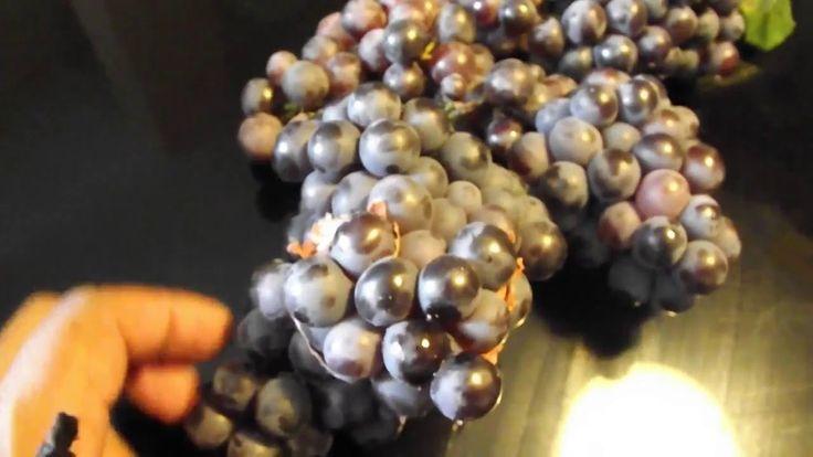 Como hacer vino casero. How to prepare homemade wine.