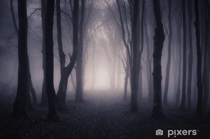 Path Through A Dark Forest At Night Wall Mural Pixers We Live To Change In 2020 Forest Backdrops Night Forest Dark Forest