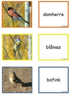 fågel4