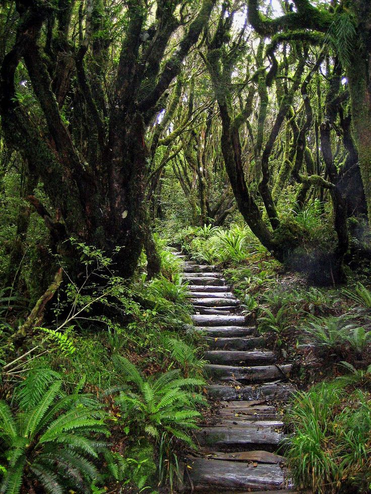 Mangorei Track - Egmont National Park, Taranaki, New Zealand by mathieu.LM