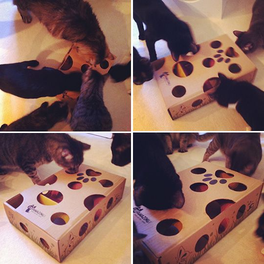 Cat Amazing. Toys that stimulate cats to think are critical for environmental enrichment
