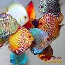 Image result for aquascape pez disco