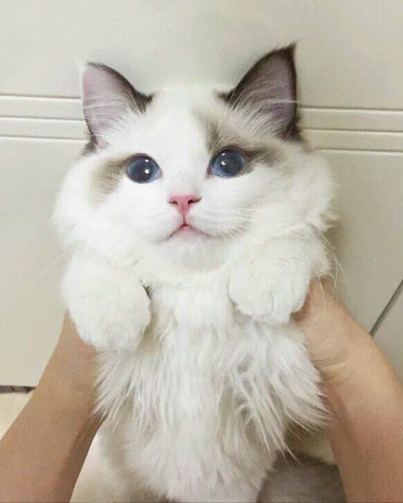"Fluffy love!.......ONE OF MY FIRST KITTIES WAS NAMED ""FLUFFY"" ....... A VERY GOOD, LOVABLE LITTLE GIRL...............ccp"