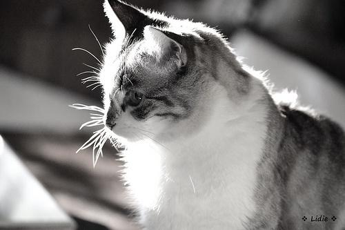Yamila in the sun