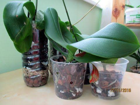 Орхидеи из мусорки: посадка фаленопсиса № 3 и № 5 - YouTube