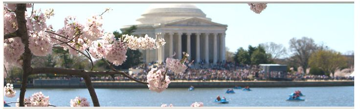 I love walking around the Tidal Basin, especially during the Cherry Blossom Festival.  However, one of these days I'm going out on the water in a paddle boat - it looks like fun!