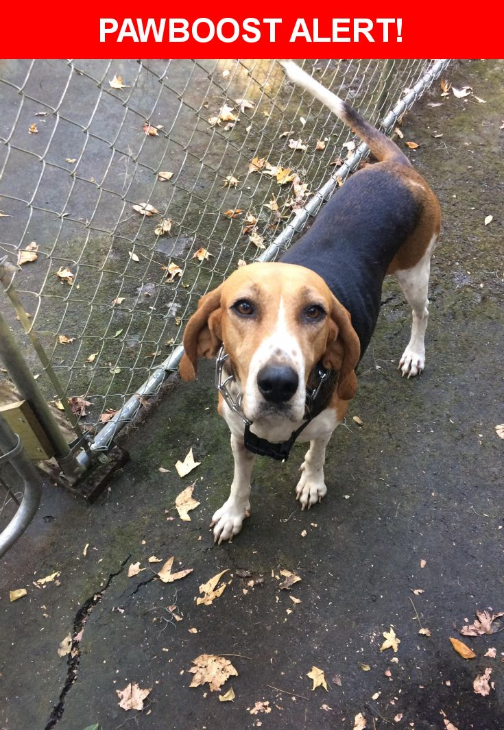 Is this your lost pet? Found in Micanopy, FL 32667. Please spread the word so we can find the owner!  Description: Young, female, spayed, no collar, possible beagle/coin hound mix, very sweet!   Nearest Address: Marion county animal services, Ocala, FL