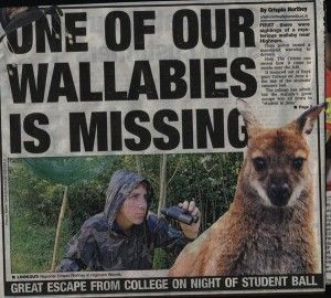 Wallaby escapes gloucestershire hartpury college student ballCollege Students, Hartpuri Colleges, Wallaby Escape, Student Ball, Schools Diaries, Colleges Student, Vet Schools, Gloucestershire Hartpuri, Escape Gloucestershire