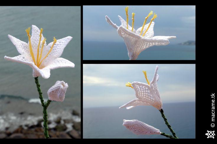 Blu Macrame Orchid di Breach90 su DeviantArt