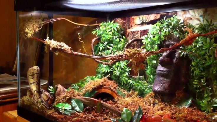 Ball python terrarium set up