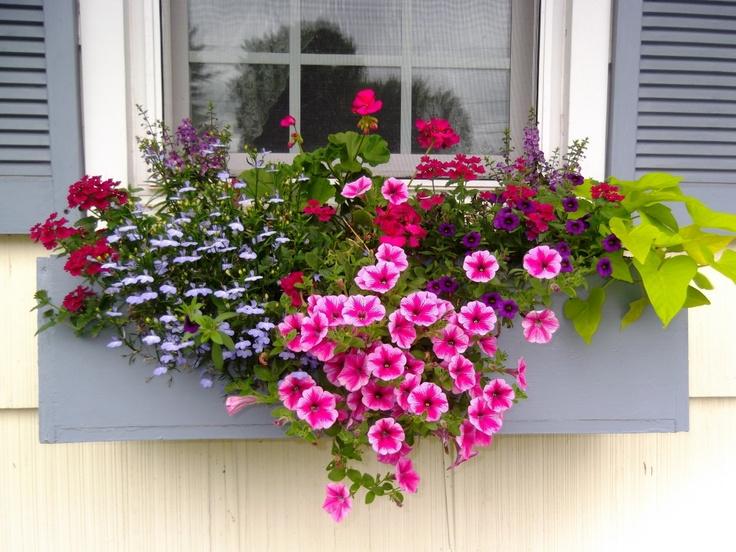 One of my 3 window boxes. Blue Lobelia, fuschia Million Bells, pink Supertunia, wine Verbena, a purple Angelonia, raspberry geranium and a lime green Sweet Potato vine.