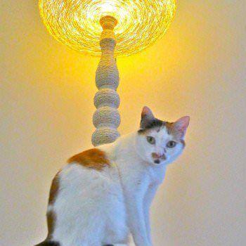 Lighting cat tree