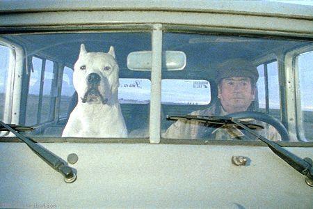"""Bombon el perro"" de Carlos Sorín programmé vendredi 28 juillet à 19h http://www.forumdesimages.fr/les-programmes/soyons-amis/les-apprentis_1"