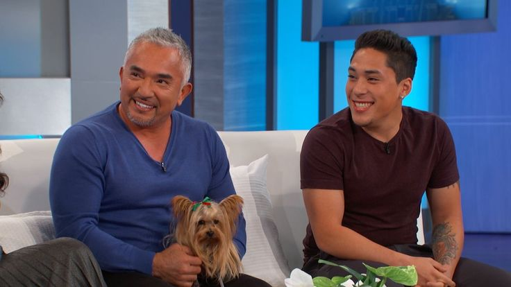 """Cesar Millan and his son Andre are starring in a new show together!  The father and son duo join The Doctors just ahead of the premiere of their new Nat Geo WILD series, """"Dog Nation,"""" where they take on your pressing questions about your favorite furry little friends.  Watch:Embarrassing Dog Behavior"""