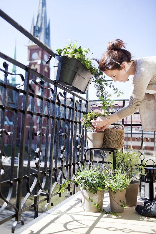 Woon jij in een stad en heb je geen tuin tot je beschikking, maar droom jij wel van je eigen moestuin? Creëer dan je eigen moestuin op je balkon. http://www.vriendin.nl/creatief/zelf-maken/6565/je-eigen-moestuin-zonder-tuin