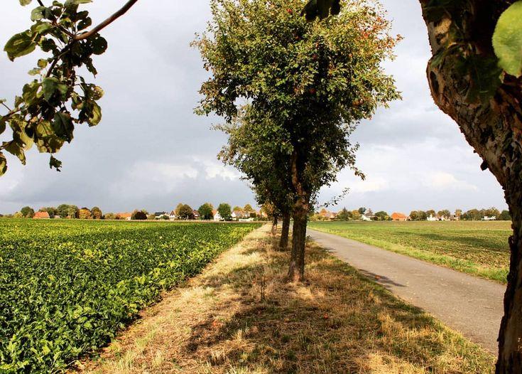Apfelallee, herbstliche ruhe am feldrand #naturliebe #niedersachsen #deutschland …  – Kuchen