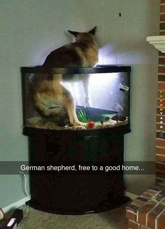 25 best ideas about fish tank stand on pinterest tank for Raw fish for dogs