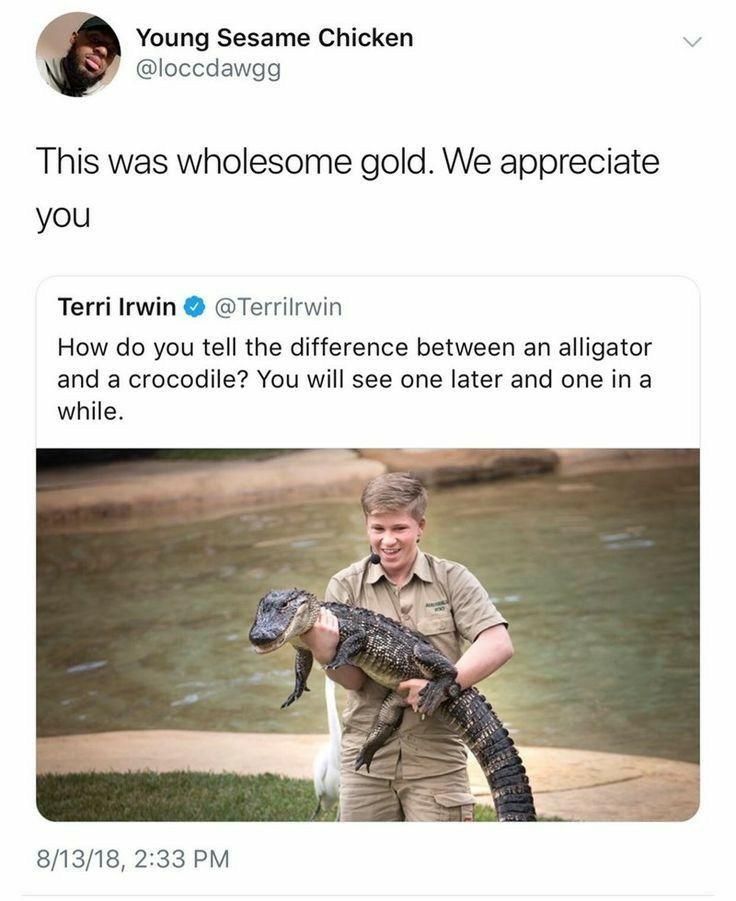 Pin By Kellie Ford On Australia Straya In 2020 Dad Jokes Steve Irwin Aussie Memes