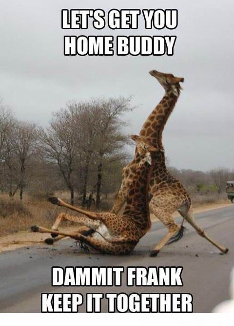Entertaining LoL » Funny Giraffe