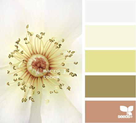 macro tones design seeds hues tones shades  color palette, color inspiration cards #hues #tones #shades #colorpalette #colorinspiration #designseeds