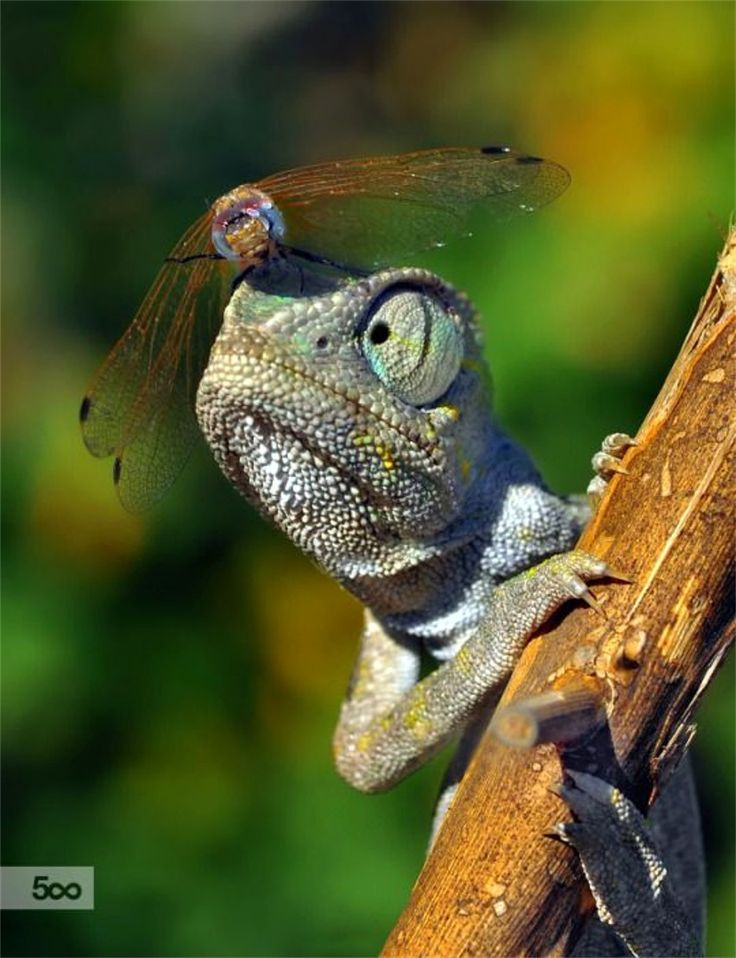 Best Small Lizards Ideas On Pinterest Lizards Baby Lizards - Majestic dragon lizard caught playing leaf guitar indonesia