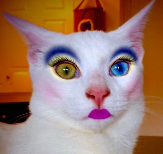 52 best images about ANIMALS WEARING MAKEUP on Pinterest ...