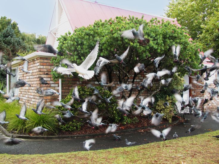 A beautiful shot of the birds flying away near the Browns Bay library. New Zealand