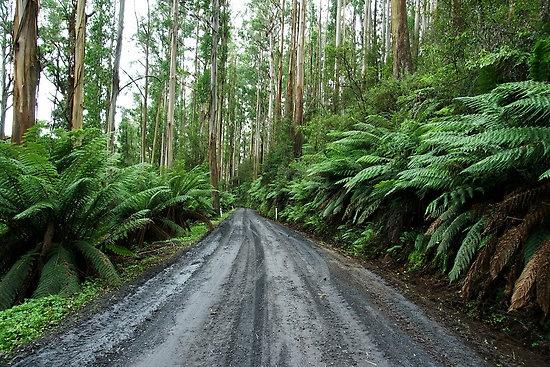 Mount Donna Buang, Yarra Ranges National Park, VIC, Australia