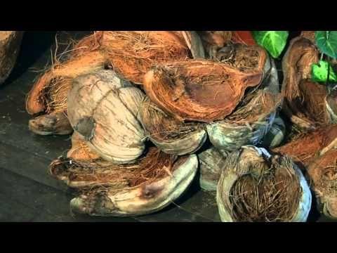PASO A PASO - Utilizando fibra de Coco como Sustrato - Parte 1 - YouTube