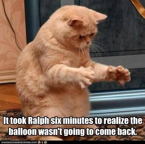It took Ralph six minutes to realize the balloon wasn't going to come back.: Cats, Funny Pictures, Funny Cat, Poor Ralph, Funnycat, Cat Mems, Funny Animal, Balloon, Cat Memes