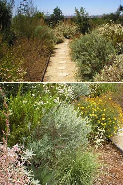 California Native Gardens - See the inaugural tour by San Diego's CNPS Chapter