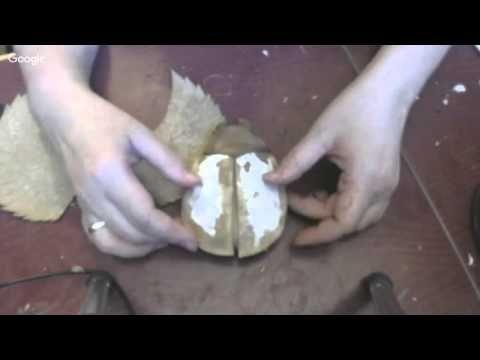 Мастер класс Скарабей. текстильная грунтованная игрушка - YouTube