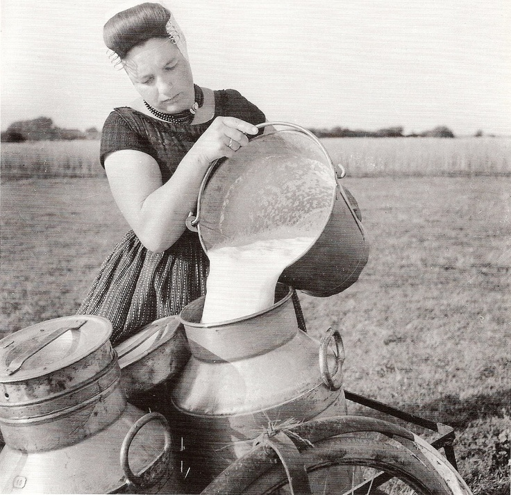 verse melk #Zeeland #Walcheren
