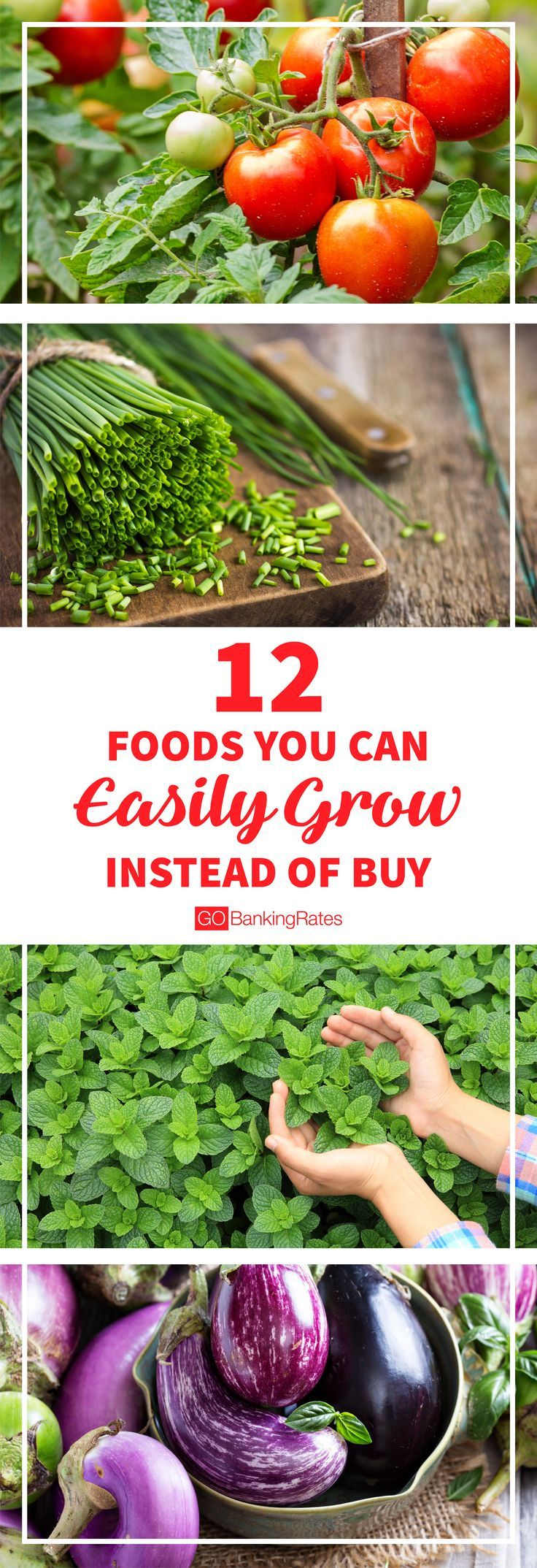 You could easily save money, time, and increase your health by growing produce yourself.