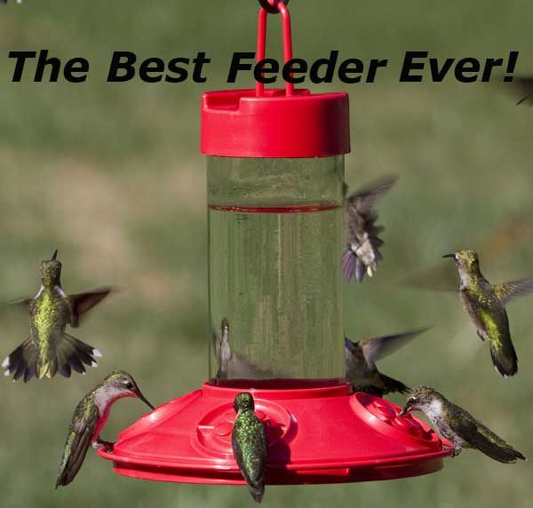 Said to be the BEST Hummingbird Feeder Ever! The Dr.JB's Feeder with outstanding features. I give it 5 stars in my review.