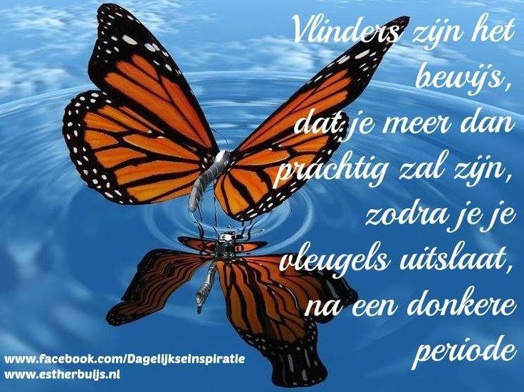 Vlinders zijn het bewijs, dat je meer dan prachtig zal zijn, zodra je je vleugels uitslaat na een donkere periode.