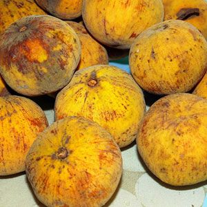 Santol  The flavor of a particular santol (some are extremely sour, while others are sweet) depends on which part of the fruit is consumed. Sometimes the outer orange part of the fruit underneath the skin is eaten and in other cases it's the inner white pulp. Typically the pulp is thought to be the sour part of the fruit. Today the santol is enjoyed in countries such as India, Indonesia, and the Philippines.