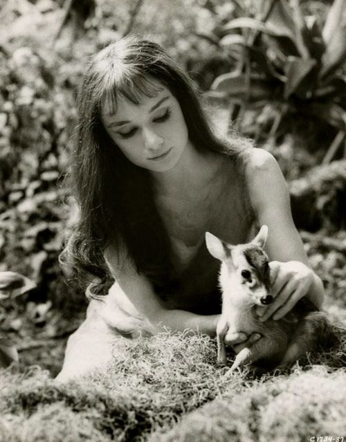 Audrey Hepburn with her pet deer Ip in a publicity photo for Green Mansions (1959).