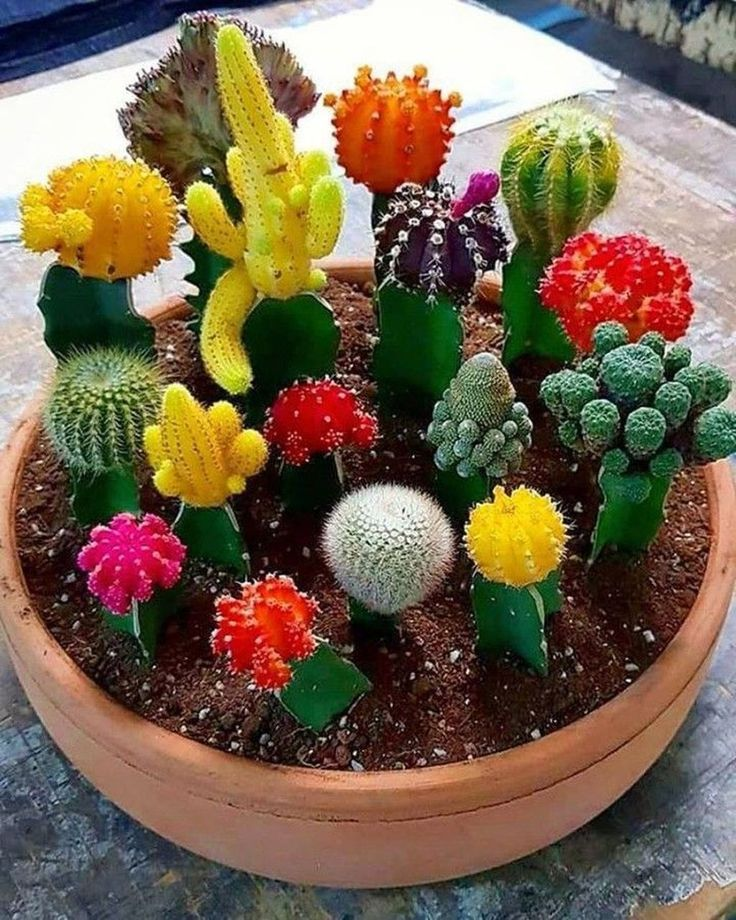34 Inspiring Indoor Garden Succulent Ideas Mini Cactus Garden Succulent Garden Indoor Succulent Garden Diy