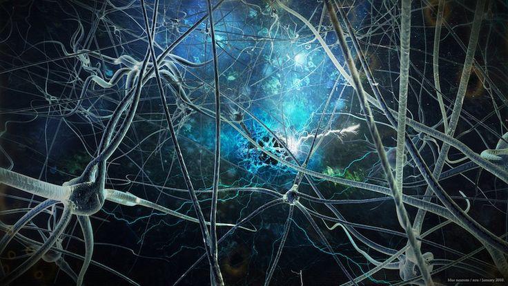 Descubren sorprendente variación entre los genomas de las neuronas individuales de un mismo cerebro