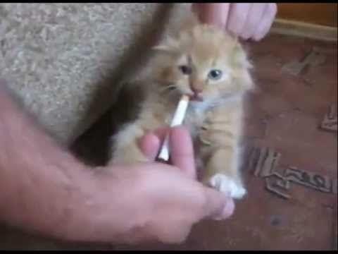 Топ приколы с кошаками 2014#24 funny cats videos - YouTube