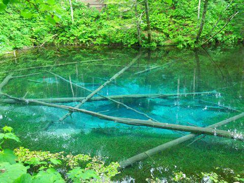 まるで妖精の住処!?夢みたいな神秘の青「神の子池」(北海道)