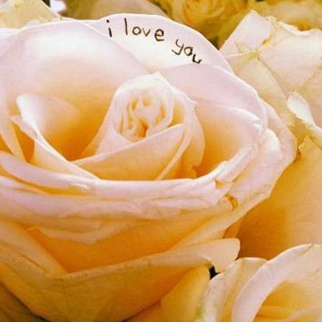 I love you...: Instagram Viewer, I Love You, Creative Pictures, Bouquets, Grooms Sneak, 640640 Pixel, Bride, Laurenconrad Lauren, Instagram Photo