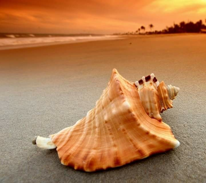 Along the sand and sunset